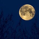 Blue Moon thumbnail
