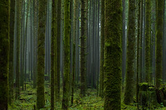 Silence (Kristian Francke) Tags: moss green bc canada british columbia pentax trees forest woods wilderness outdoors
