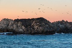 Morning At Seal Rock (chasingthelight10) Tags: events photography travel landscapes beaches nature ocean rockformations sunrise sunrises places california pebblebeach bigsur