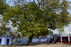 DSC_1678 (চিত্ত যেথা ভয় শূন্) Tags: biharinath baranti