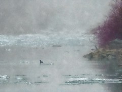 Like a painting, for the Flickr Lounge (mrsparr) Tags: fotosketcher likeapainting theflickrlounge weeklytheme coot americancoot humberbayparkeast toronto ontario canada lakeontario ice winter winterscene fog humberbay bay bird water
