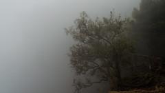 Fade into the fog (sakthi vinodhini) Tags: forest jungle fog tree winter tamil nadu india incredible kodaikanal guna caves mountains hills mist