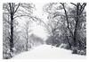 Winter Walk (bprice0715) Tags: canon canoneos5dmarkiii canon5dmarkiii landscape landscapephotography nature naturephotography beautiful beauty beautyinnature snow snowylandscape winter white blackandwhite blackwhite bw monochrome mono peaceful lyonspark