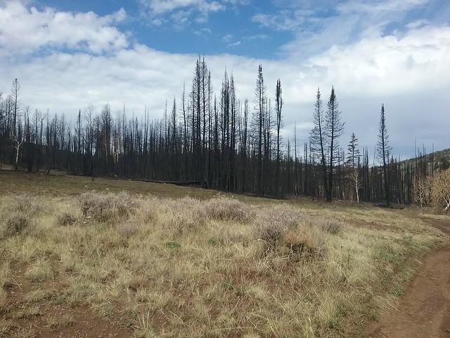 Duck Creek Fire 4