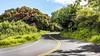 Every day is a winding road... (RaulCano82) Tags: roadtohana hana hawaii maui island curves greenery trees aloha winding raulcano hi canon 80d landscape lush 2017 nature photography