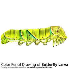 Butterfly Larva with Color Pencils [Time Lapse] (drawingtutorials101.com) Tags: larva butterfly butterflies butter fly larvas eggs sketch sketches sketching draw drawing drawings color colors coloring how timelapse video pencil speed