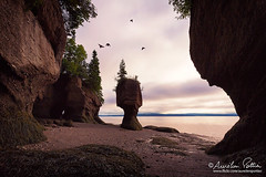 Hopewell Rocks, quatre pigeons (Aurelien Pottier) Tags: hopewellcape hopewellrocks nouveaubrunswick newbrunswick canada amériquedunord northamerica baydefundy bayoffundy touristattraction traveldestinations nationallandmark naturereserve flowerpotrock rocherenpotsdefleurs pigeon oiseaux birds animal paysage landscape seascape day jour dawn aube tree arbre nature rockformation geology geologie cliff falaise lowtide maréebasse algue algae vol flying ca