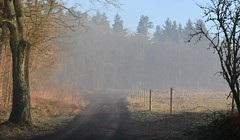 To the woods, to the sunshine (:Linda:) Tags: germany thuringia village bürden path mist conifer