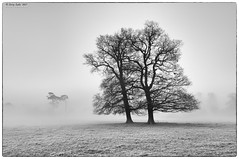 It's cold again (jerry_lake) Tags: d90 langleycountrypark langleypark fog mist recession trees silverefexpro2
