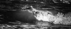 IMG_6559_edited (picolo_rasco@hotmail.com) Tags: belgium sea blankenberge nature breakwater