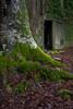 Talysarn Chapel (ShrubMonkey (Julian Heritage)) Tags: entrance doorway talysarn building overgrown decay ruin abandoned derelict lost forsaken dorothea quarry glen details green moss growth slate chapel nantlle tree door portal