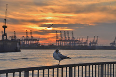 Oh Hamburg (Maexel Fotografie) Tags: hamburg elbe hafen hh hansestadt landungsbrücken möwe sunset sundown sonnenuntergang sonnenaufgang sonne kräne port harbour
