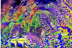 (psychedelic world) Tags: blumen flowers garden garten bunt colored colours farben farn fern nature natur psychedelisch psychedelic psychedelicworld