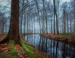Mystic Voorstonden (Mario Visser) Tags: voorstonden forrest tree mist fog green water leafs fujifilm xt2 mariovisser nature landscape netherlands
