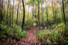 Path in the Middle (HSS) (13skies) Tags: elements blurred effect photoshop woods alpsrd trees leaves sony creating bambootablet abstract digitalart a2a