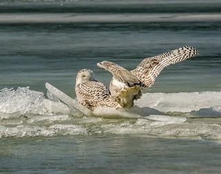 Ride the Wild Surf . . .