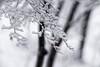 _DSC5446 (kymarto) Tags: bokeh bokehlicious bokehphotography dof depthoffield nature naturephotography beauty beautiful sony sonyphotography sonya7r2 oldlens vintagelens dallmeyersupersixanastigmat winter snow snowstorm