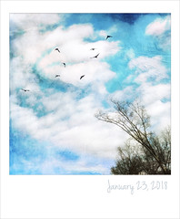 Clouds (jeanne.marie.) Tags: iphoneography iphone7plus turquoise blackandwhiteandblue aqua flight flying colorful blue sky winter textured silhouettes birds clouds