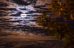 SuperLuna 🌕 (pablofelcaro1) Tags: nikonargentina nikonphotographers nikon nikonista nikonistasargentina nikontop d7100 luna superluna longexposure instagram dzoom argentinastyle argentina photography photographer photooftheday fotografosargentinos fotosdenikonistas fotografía