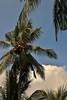 IMG_0364 (Kalina1966) Tags: bali island indonesia palm