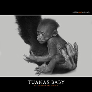 TUANAS BABY