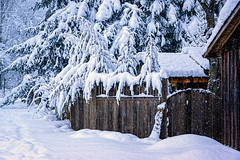 ROSH0467-Edit (Roshine Photography) Tags: alley comoxvalley cumberland environmental fence gate plants snow trees winter britishcolumbia canada ca