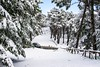 Neve | Monte Perone | Isola d'Elba (fabrizio.silvani.ph) Tags: neve snow albero tree foresta forest paesaggio cielo sky nikon isoladelba elba nikkor35mm18 fabriziosilvaniph bianco white