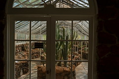 Where Do Baby Cactuses Come From? (MPnormaleye) Tags: succulent cactus cacti saguaro desert nursery greenhouse southwest glass doors window utata 24mm