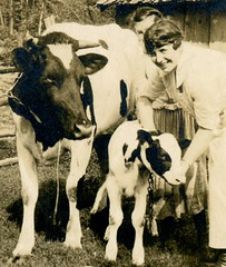 Fancy Cow and Calf (Cropped) (Alan Mays) Tags: ephemera postcards realphotopostcards rppc photos photographs foundphotos portraits men clothes clothing cows calves calf holsteincows holsteins dairycattle cattle animals women children girls farmers farming barnyards yards masks decorativemasks maskborders borders frames pictureframes masked banners scrolls scrollwork curls curledup curledupedges edges flowers shapes shaped ovals illustrations antique old vintage