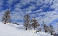 Ovronnaz (bulbocode909) Tags: valais suisse ovronnaz montagnes nature arbres mélèzes nuages paysages bleu hiver neige groupenuagesetciel