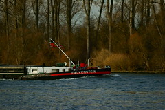 MS FALKENSTEIN (Lutz Blohm) Tags: msfalkenstein speyer rhein rheinschifffahrt binnenschifffahrt binnenschiffe gütermotorschiff fluskilometer399 fe70300goss sonyalpha7aii