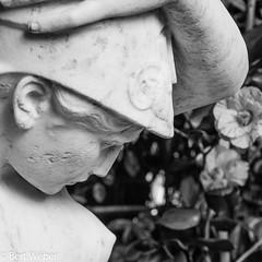 Unbenannt (weber.bert) Tags: köln jahreszeit frühling flora kamelien herbarium analogefotografie blackwhite inbiancoenero noiretblanc grauwertabstufungen sw primavera ressort spring