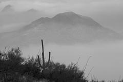 Tum011_small (patcaribou) Tags: tucson tumamochill sonorandesert fog cactii saguarocactus