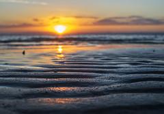 fire and ripples (gnarlydog) Tags: australia sunset beach lowtide foreshore ripples water reflection eveninglight warmlight goldenhour shallowdepthoffield bokeh manualfocus fzuiko32mmf17 refittedlens nature serene