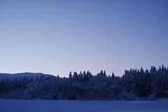 "I hear the sound of ""silence"" (fordécoll) Tags: 2018 niigata japan winter snow ice morning earlymorning dawn predawn blue sigma dp2 dp2q quattro foveon x3f"
