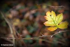 Non c'è autunno.. Senza spine (pinkystar_84) Tags: autunno spine foglia colori colors giallo jeune yellow natura canon eos700d fotografia ramo autumn stagione