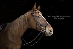 7Z5A5769-Explored (AmandaT Photos :)) Tags: 365 2018 jan love ichooselove ottb horse explore over35000views thankyou explored2018