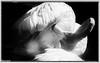 FLAMENC ROSAT AL ZOO (Francesc Farran) Tags: aves pajaros animales zoo zoologia pájaro flamenco