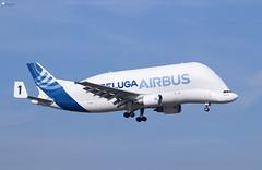 """Airbus A300 608ST """"Beluga""""- Bremen Airport - 06.03.2018 (Frederik L.) Tags: flugzeug luftfahrt flughafen airport airbus beluga bremen a300 transport fracht airplane plane"""