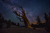 Slanted (EricGail_AdventureInFineArtPhotography) Tags: milkyway bristlecone tree sky stars ericgail canon 6d