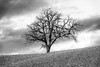 branches (*magma*) Tags: albero tree solitario solitary lonely toscana tuscany field campo collina hill vald'orcia rami branches