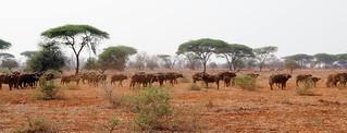 Zimbabwe Cape Buffalo Hunt 91