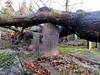 Begraafplaats Graafseweg, Nijmegen (Stewie1980) Tags: nijmegen nimwegen nimègue gelderland nederland netherlands algemene begraafplaats graafseweg stormschade storm schade omgewaaide boom grafsteen cemetery gravestones damage fallen tree