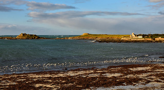 Portsall / Finistère / Bretagne / Vol de mouettes / Flight of seagulls
