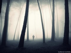 The morning mists (Guillermo Carballa) Tags: morning fog mist forest woods trees pines light bw alone man people shadows carballa olympus em5