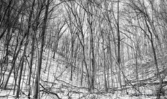 Low Pass (mswan777) Tags: dune trail hike landscape michigan outdoor nature scenic tall winter snow cold nikon d5100 nikkor 1855mm ansel monochrome black white