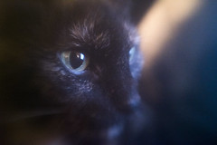 Soulcat (Sean Anderson Media) Tags: hitcamera hitcameralens lofi lofilens cat pet portrait cateye eye sonya7sii adaptedlens animal softlens blurry softedges lensdistortion closeup grain reflection
