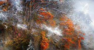 Tentative d'hiver en fin d'automne