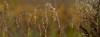 Dixon_JB_448_detail_3951 (Joanne Bouknight) Tags: dixonwaterfowlrefuge illinois mist morning observationtower rain storm thewetlandsinstitute