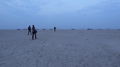 Crab Plover search at Modhva Beach, Gujarat, India -  Video (Paul B Jones) Tags: video modhvabeach gujarat india birds birding crabplover gulls canoneos5dmarkiv ef800mmf56lisusm canoneosm6 efm1545mmf3563isstm dromasardeola nature wildlife tourism ecotourism tour tourist चिड़िया indiya इंडिया inde indien indië asia asian travel indian
